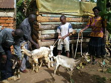 Kenya goat project