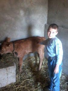 Ukaine cow Heidi