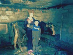 Cow Ukraine