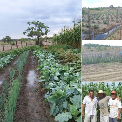 Brazil crops